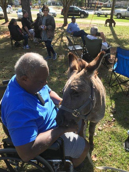 donkey2019